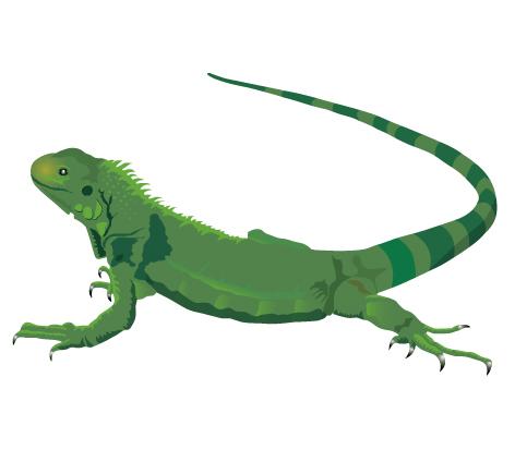 Iguana Clipart-Clipartlook.com-472