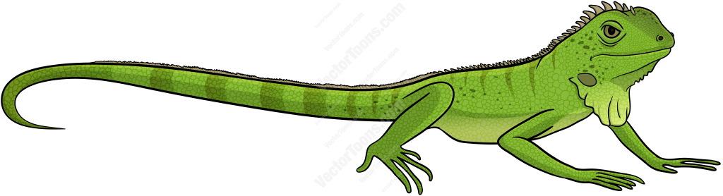 Green Iguana clipart iguana #2