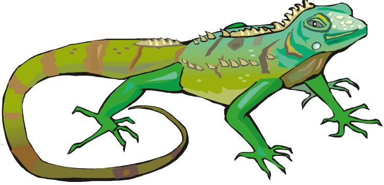 Iguana Clipart #13993