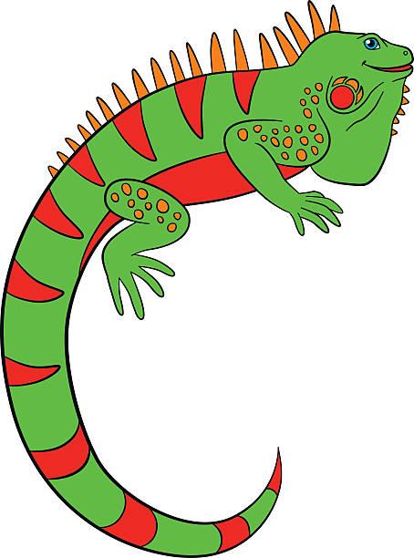 Iguana Clipart Clip Art, Vector Images u0026 Illustrations