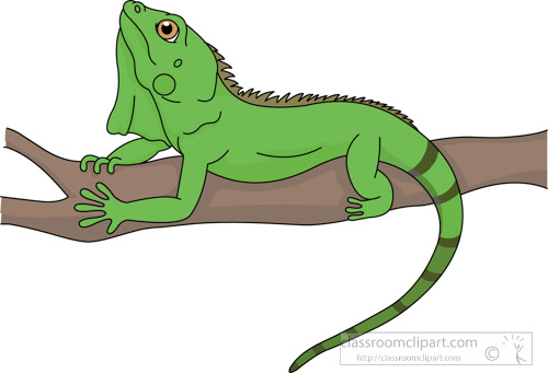 Iguana Clipart Green Lizard #5