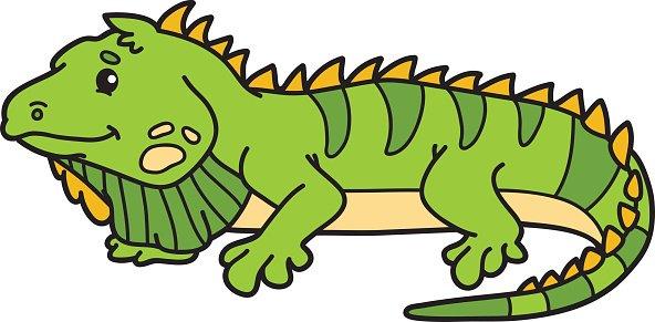Şirin iguana.