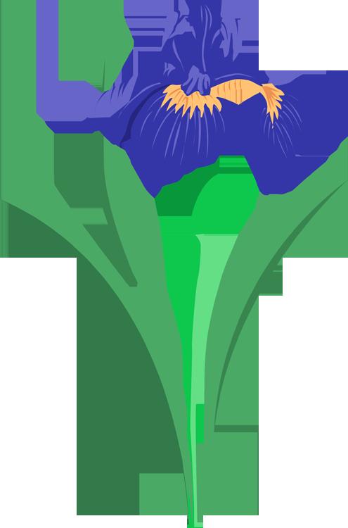 Iris cliparts
