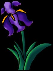 Iris Flower Clipart
