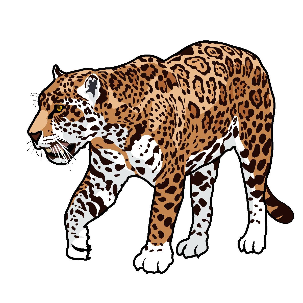 Jaguar clipart 3
