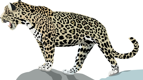 Free Jaguar Clipart, 1 page of Public Domain Clip Art