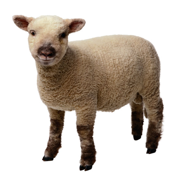 Jesus lamb clipart clipart kid
