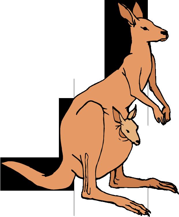 Kangaroo Clip Art