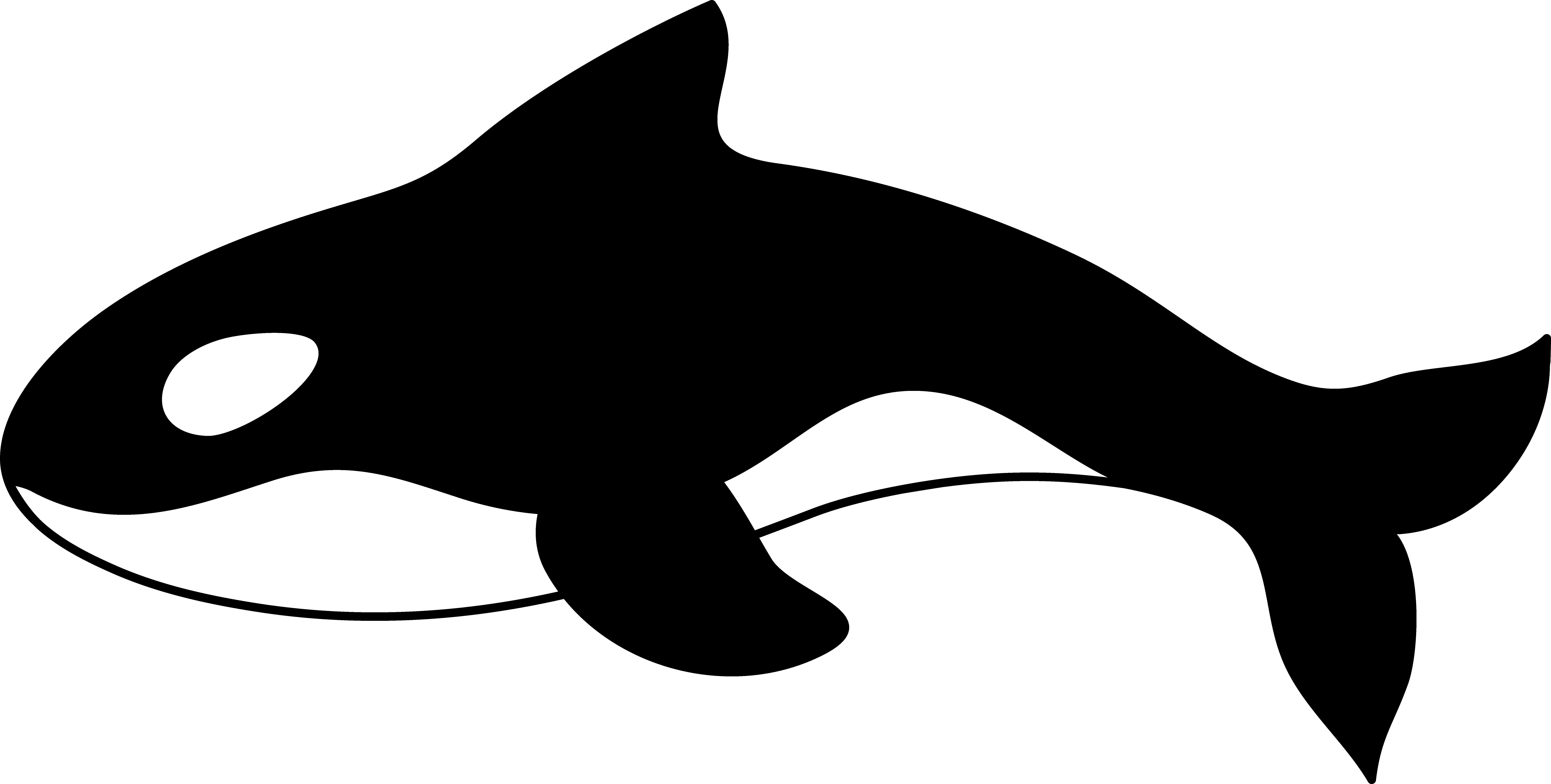 Killer Whale Clipart-Clipartlook.com-9823