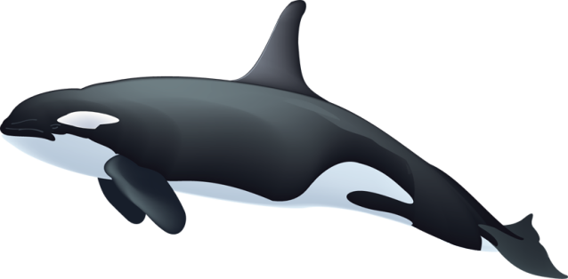 Killer-whale-clipart