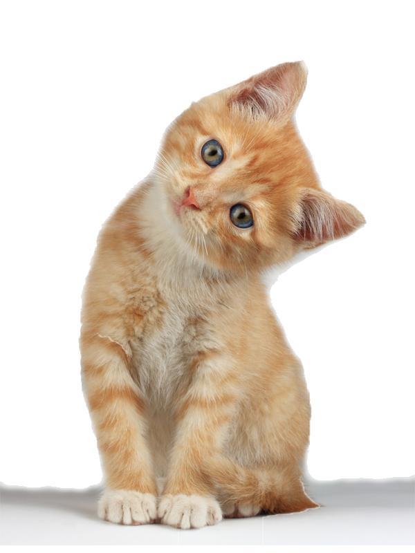 Kitten Clipart PNG image - Kitten Clipart 528