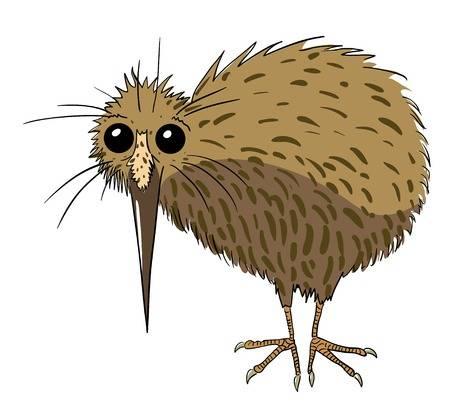 Cartoon image of kiwi bird Illustration