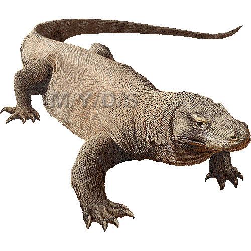 Komodo Dragon clipart graphics (Free clip art