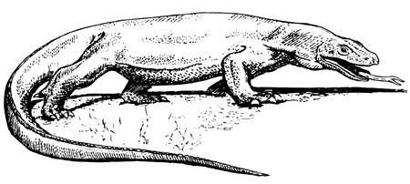 Komodo Dragon Royalty Free Cliparts, Vectors, And Stock Illustration. Image  10402838.