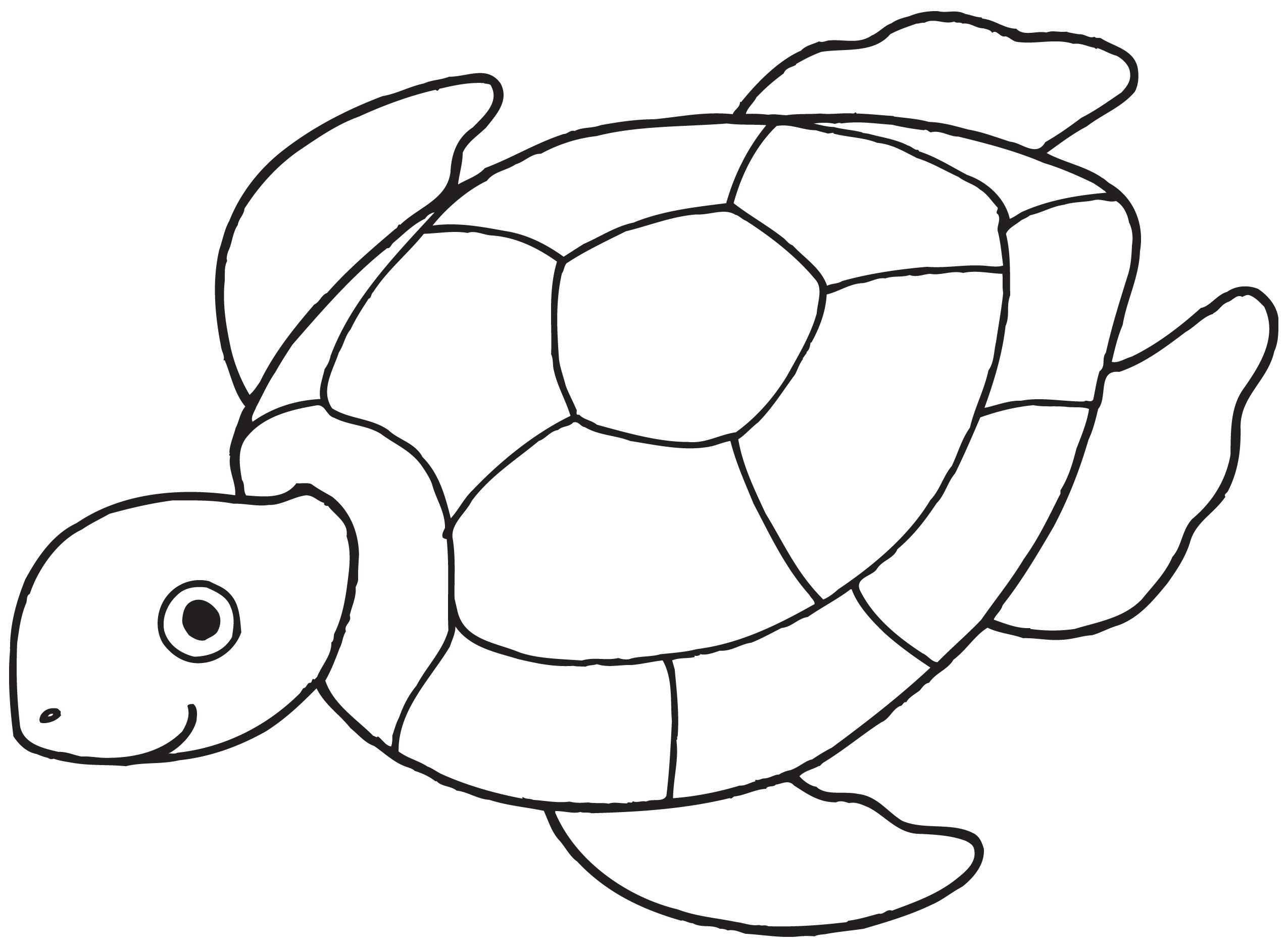 Lagger Head Sea Turtle For Beach Koozie Prints Seat Turtle Design