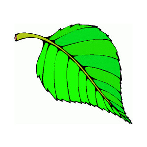 Leaf clip art free free clipart images 2