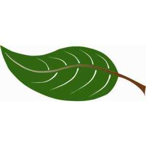 Leaf free leaves clipart free .