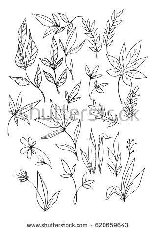 Set of hand drawn vector flor - Leaf Outline Images