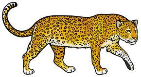 Leopard Clipart #1