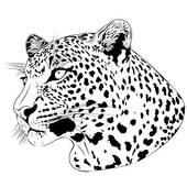 Leopard, tattoo; Leopard, tattoo