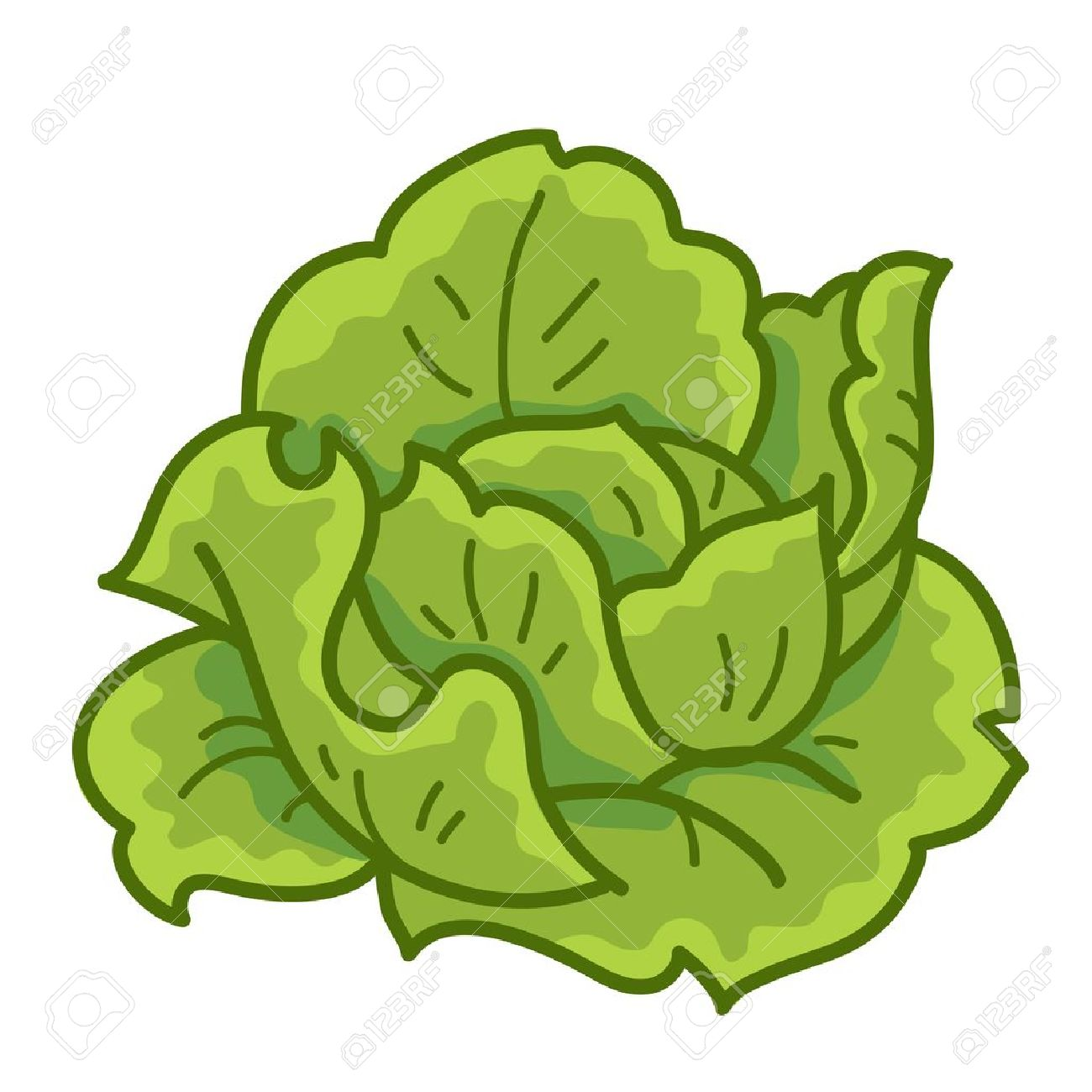 Lettuce clipart cartoon #9