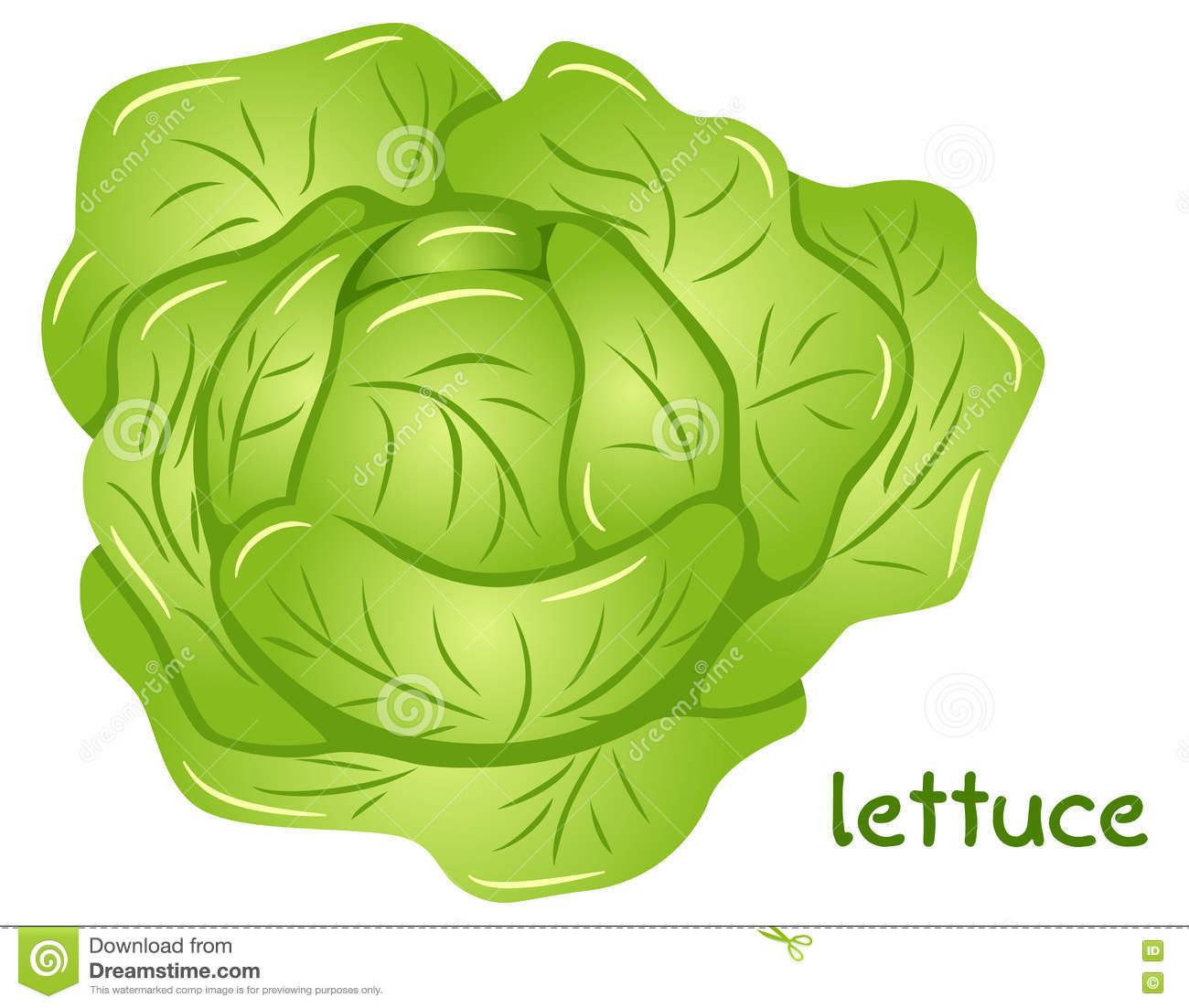 Lettuce clipart head lettuce #2