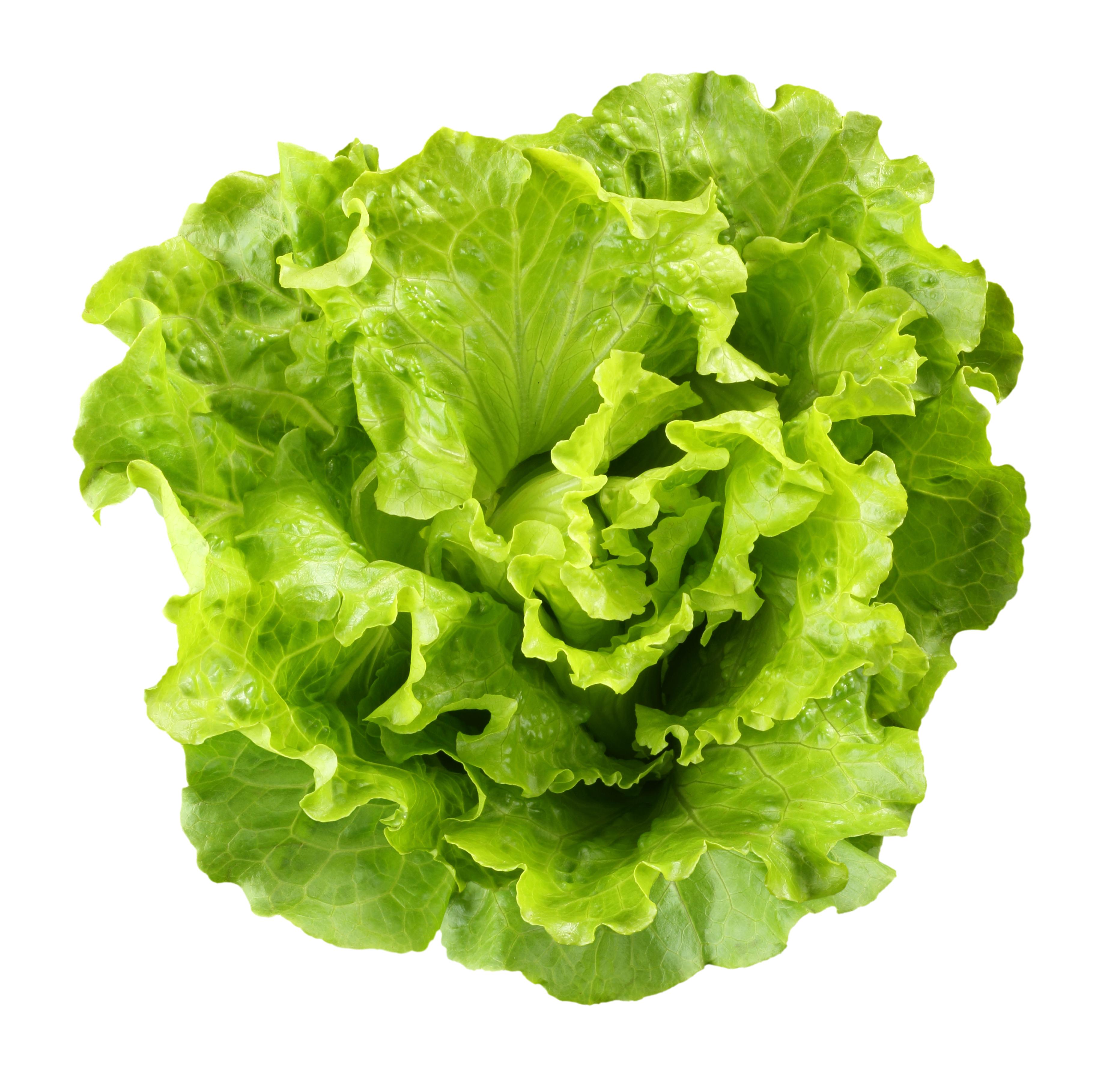 Lettuce free Lettuce Clipart clip art on clipart library 3