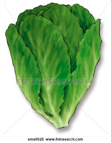 Romaine Lettuce Clipart #1