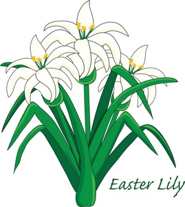 Lilies cliparts