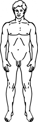 ... Line Drawing Of A Human Male