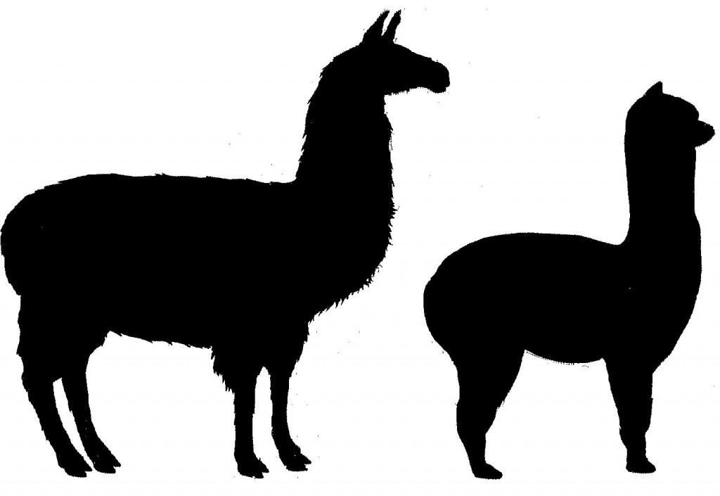 Llama clipart 4