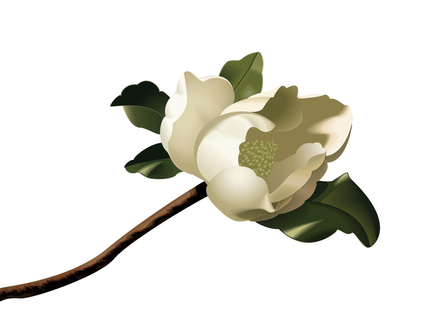 Magnolia Clip Art Clipart Best