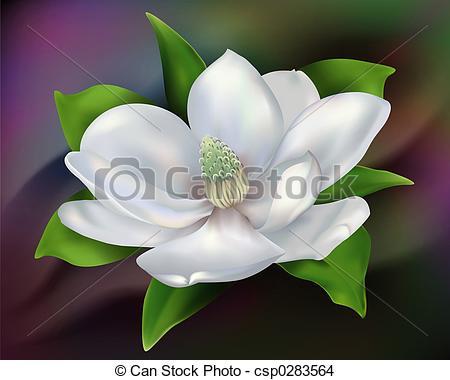 Magnolia - Digital illustration from low resolution scan.