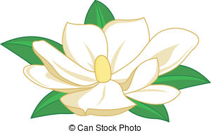 Magnolia Flower Clip Artby Lidiya8/2,081; Magnolia flower. - Magnolia flower on white background,.
