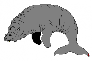 Clipart Manatee Clipart