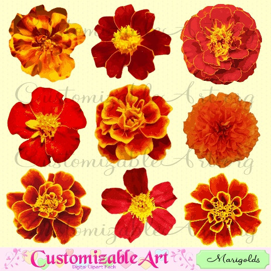 Marigold Clipart Digital Flower Clip Art Tagetes Flower Red Fiery Yellow Bright Colored Flower Clipart Printable