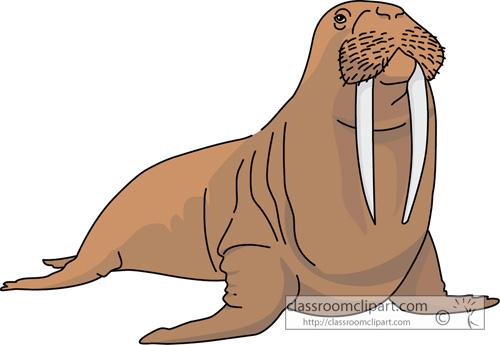Marine Life Clipart Walrus 728 Classroom Clipart