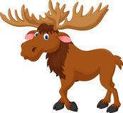 Moose cartoon Stock Images