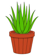 Mother In Laws Tongue Or Snake Plant In Planter Clipart Size: 84 Kb