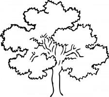 Oak tree, Clip art and Clipart .