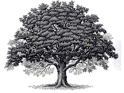Oaktree Clip Art Flickr Photo Sharing