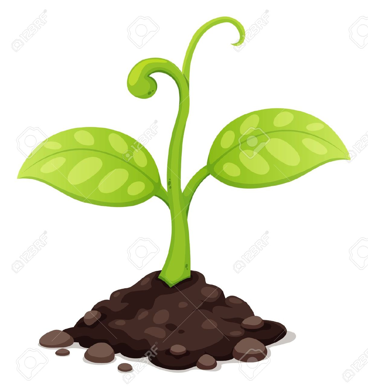 of New born plant growing