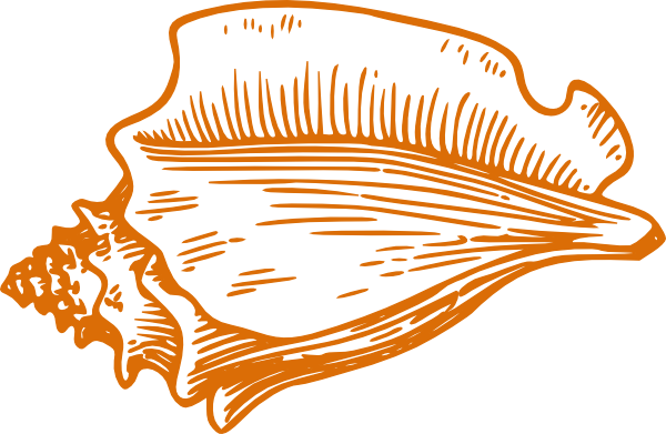 Orange Conch Shell Clip Art At Clker Com Vector Clip Art Online