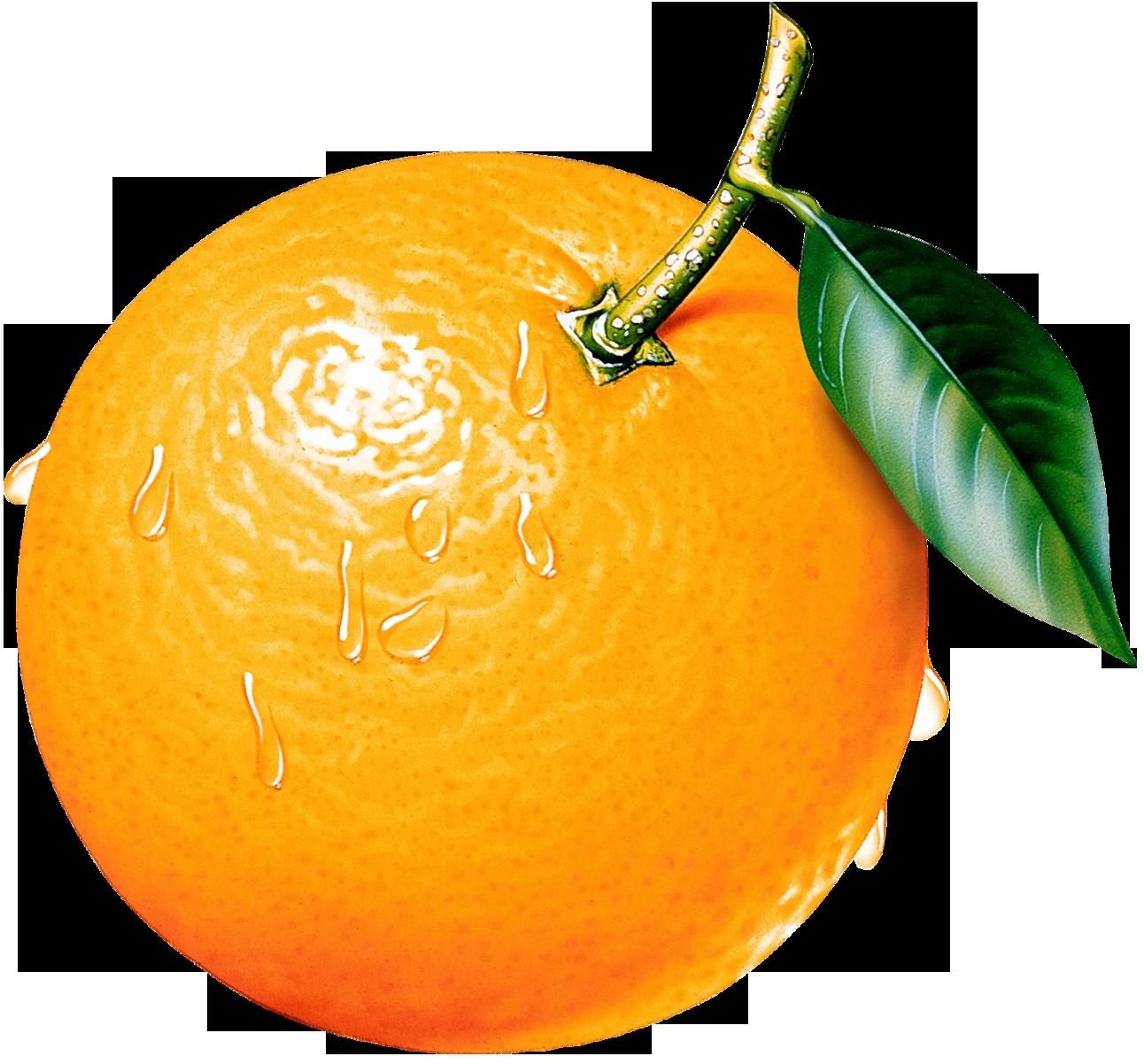 Orange Tree Clipart Clipart Panda Free Clipart Images