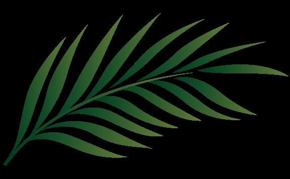 Palm sunday leaf clipart kid
