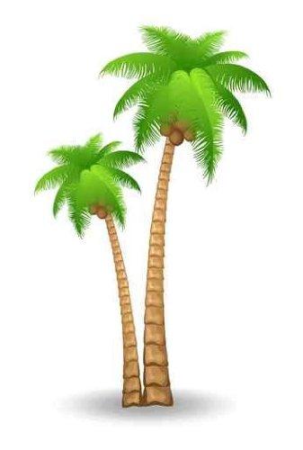 ... Palm tree clip art ... 30b89a92d25311369574bfbda0004a .