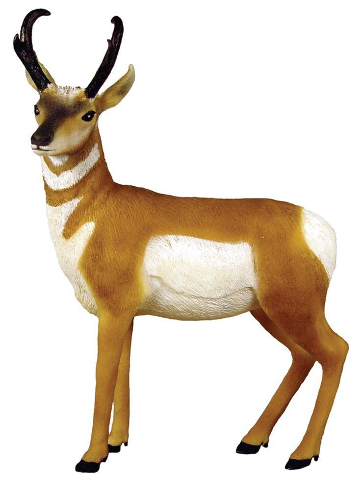 Pics For u0026gt; Pronghorn Antelope .