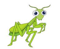 picture-praying-mantis-214