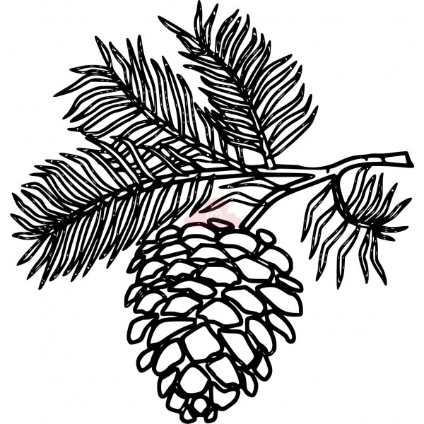 pine tree branch clipart