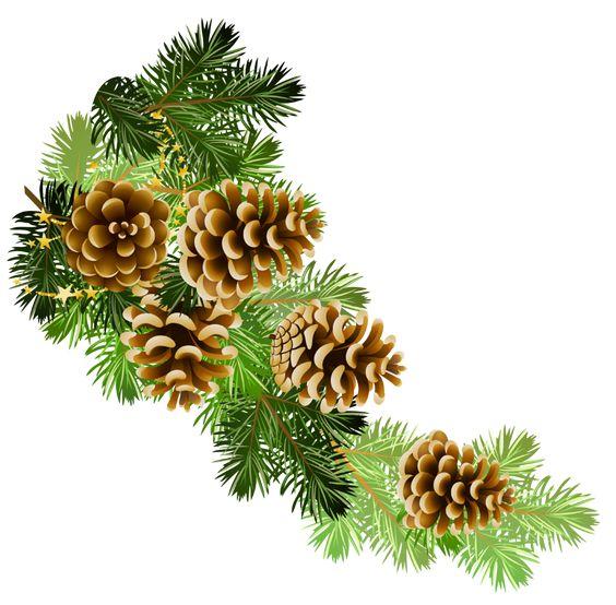 Pine and pine cones branch border clip art